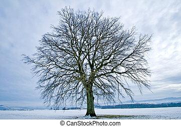 roble en invierno