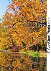 roble, en, otoño, 05