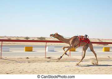 Robot camel racing - Robot controlled camel racing in the ...