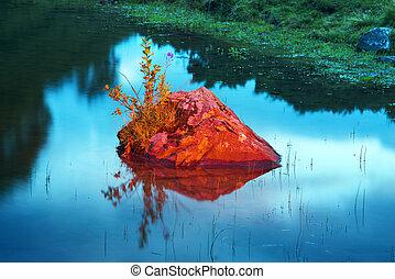 roca, con, un, flor, en, el, lago