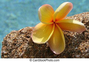 roca, piscina, y, flor