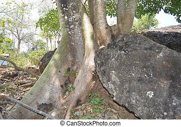 rocas, plantas, prosperar