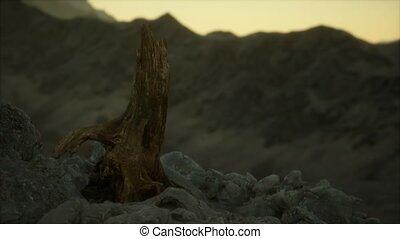 rocher, coucher soleil, pin, granit, arbre mort