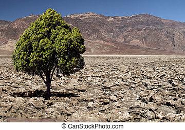 rocheux, désert, arbre, solitaire, vert