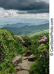 rochoso, rastro, através, catawba, rhododendron