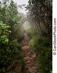 rochoso, rastro, através, nebuloso, rhododendron, arbustos