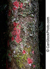 Rock and moss on tree bark background
