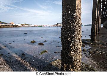 Rock barnacle under the bridge