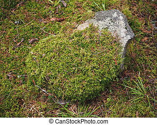 rock covered with moss in the forest