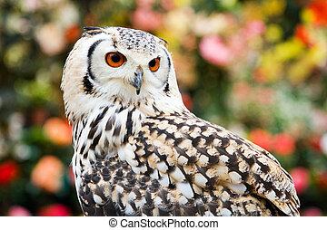 Portrait of a Rock Eagle owl (Bubo bengalensis)