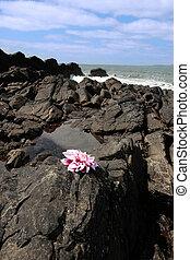 rock flower
