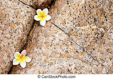 Rock Flower Composition - White flowers and natural rock...