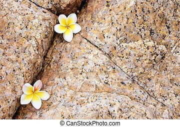 Rock Flower Composition
