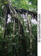 Mulu - Rock formation at Mulu National Park, Sarawak, ...