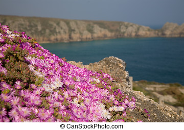 Rock garden with little pink flowers by the seaside with...