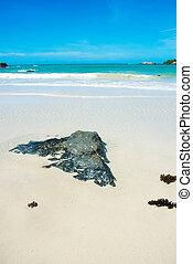 rock on the beach with blue sky