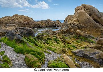 Rock pool. - Rock pool covered in green seaweed.