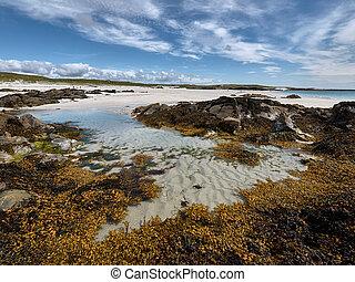 Rock pool with seaweed