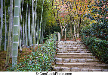 Rock stair in Japanese bamboo garden