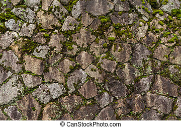 Rock stone wall with green sprout