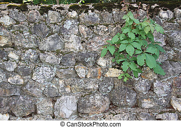 rock wall with plant