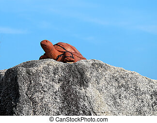 statue of a turtle