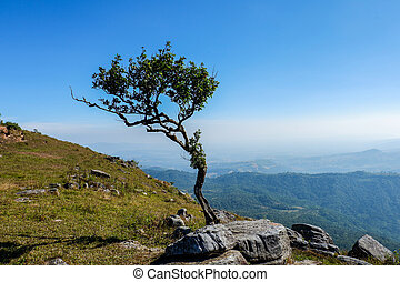 Rock with tree on hill top mountain and blue sky background