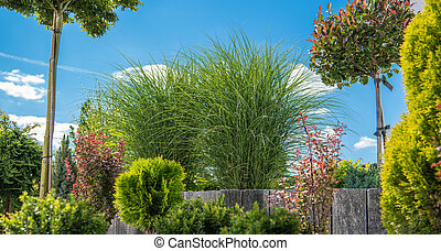 Rockery Garden Plants Summer Vegetation