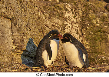 Rockhopper Penguins on Bleaker Island