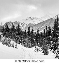 rockies, invierno, canadiense
