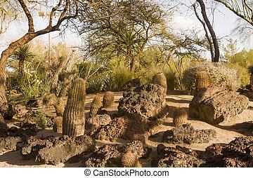 Rocks and Cactus in a Desert Garden