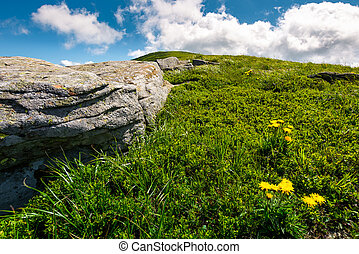 rocks and dandelions on grassy hillside. lovely summer...