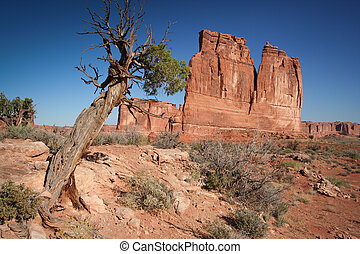 Rocks at the Arches National Park