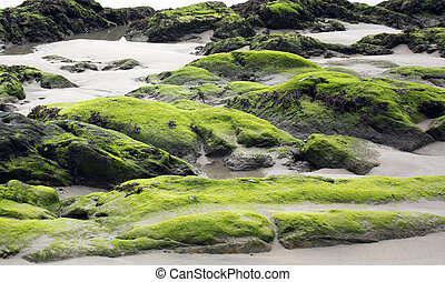 rocks full of seaweed at low tide from a beach