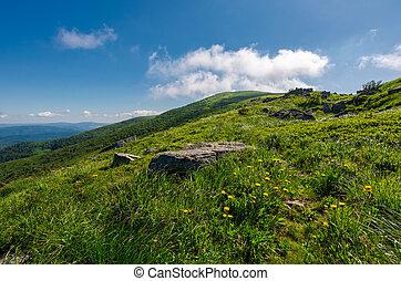 rocks on grassy hillside of the mountain. yellow dandelions...