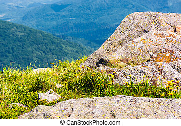 rocks on the edge of a grassy hillside. yellow dandelions...