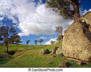 Rocks, treees and grassland