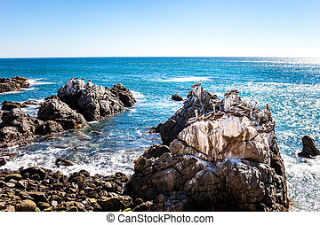Ocean rocks with brown pelicans in Vina del Mar, Chile