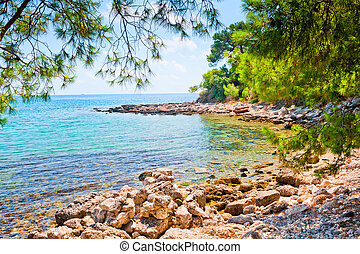 rocky beach and a picturesque pine forest