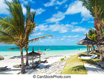 rocky beach of mauritius with palm trees and deckchairs in a...