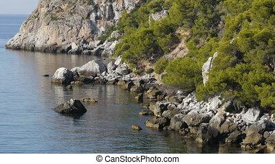 rocky beach with pine