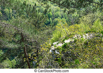 Rocky cliff in dense green forest. Spring colors in the mountain forest.