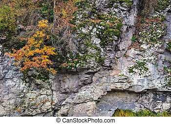 rocky cliff with plants in autumn. lovely background with...