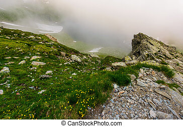 rocky cliffs in foggy weather. wild flowers among the grassy...