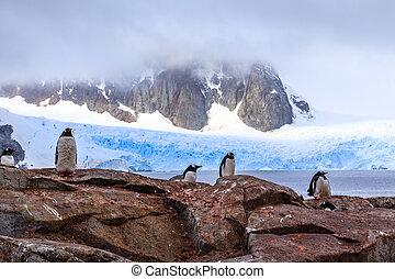 Rocky coastline with flock of gentoo pengins and rock with blue glacier in the background at Peterman island, Antarctic peninsula