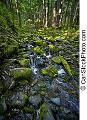 Rocky Mossy Creek - Olympic National Park Rainforest Creek. ...