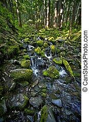 Rocky Mossy Creek - Olympic National Park Rainforest Creek. ...