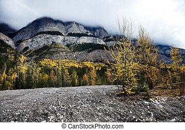 rocky mountain, 8km North of Saskatchewan Crossing. Yoho ...