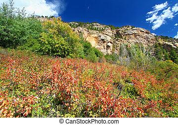 Rocky Mountain National Park Landscape - Beautiful forest...