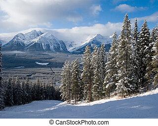 Rocky mountain piste - Alpine trees beside a skiing piste in...